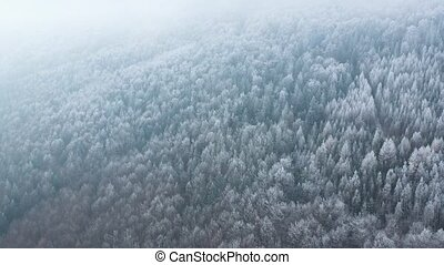 Flight over a fabulous snow-covered forest on the slopes of the mountains. Winter mystical landscape