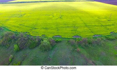 Flight over a field of oilseed rape