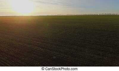flight over a field of wheat at sunset