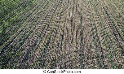 Flight over a field with green grass