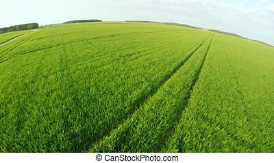 Flight over agriculture. Cereal culture. Flight with beautiful nature