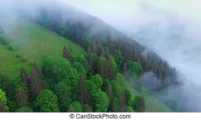Flight over beautiful spring forest in Ukrainian...