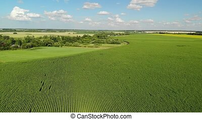 Flight over field of sunflower at edge of village in Russia