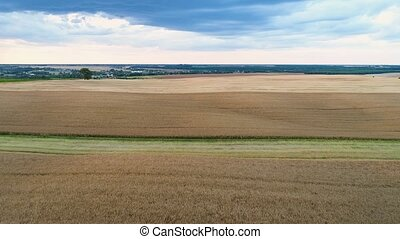 Flight over fields with ripe rape and wheat.
