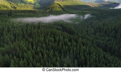 flight over forest in mountains
