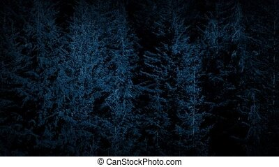 Flight Over Forest Trees At Night - Gliding past pine forest...