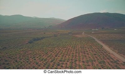 Flight over highland vineyard in Andalusia, Spain - Aerial...
