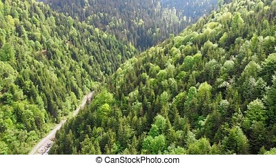 Flight over road and beautiful spring forest in Ukrainian...
