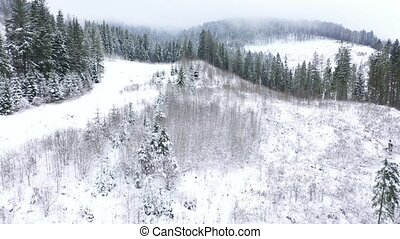 Flight over snowstorm in a snowy mountain coniferous forest...