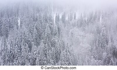 Flight over snowstorm in a snowy mountain coniferous forest,...