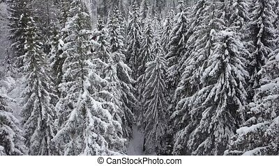 Flight over snowy mountain coniferous forest. Clear frosty...