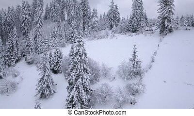 Flight over snowy mountain coniferous forest. Overcast...