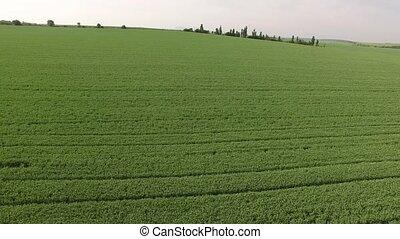 Flight over the green field. bird's eye view. - Flight over ...