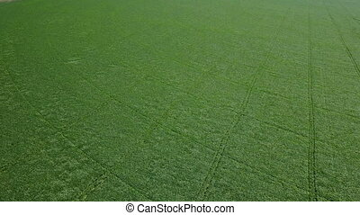 Flight over the green field. Aerial survey