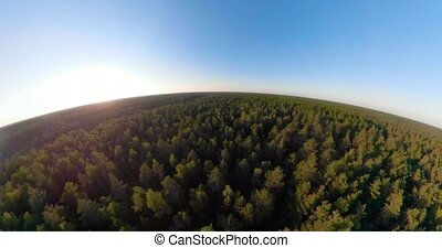 Flight over the green forest spherical panorama - Green...