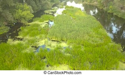 Flight over the river overgrown with grass, Ukraine surrounded by trees - aerial videotaping