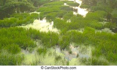 Flight over the river overgrown with grass, Ukraine...