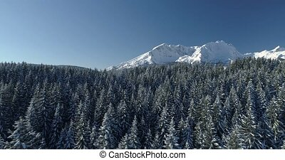 flight over the snow-covered spruce forest with mountains in...