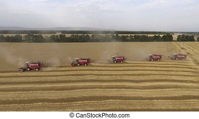 Flight over the wheat field. Aerial view of modern combine harvesting wheat on the field.