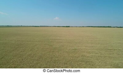 Flight over the Wheat Field.
