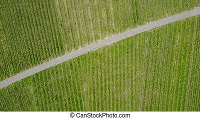 flight over vineyard Kappelberg near Stuttgart in Germany