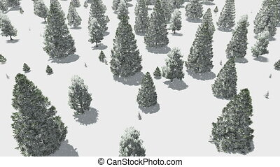 Flight over winter fir forest