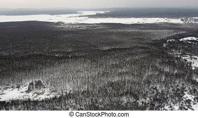 Flight over Winter Forrest