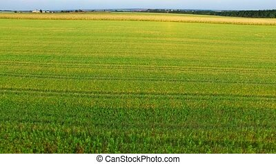 Flight to Quadrocopters Over a Field of Corn