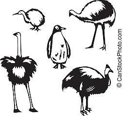 Five stylized vector illustrations of flightless birds