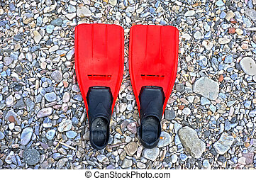 Flippers on the beach