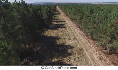 Fliying out firebreak, aerial view with pine tree forest