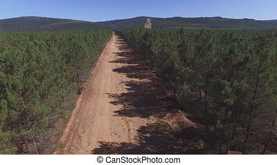Fliying over firebreak, aerial view with pine tree forest