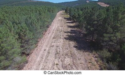 Fliying over firebreak with pine tree forest