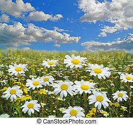 fllowers, 雲, 春, 背景, 季節, スカイブルー, 緑の採草地