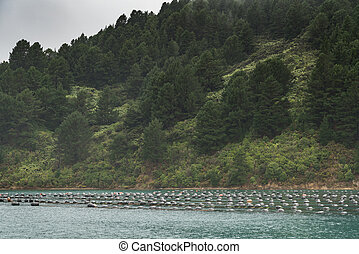 Floaters of Hitaua Bay Mussel Farm with mountains, New Zealand.