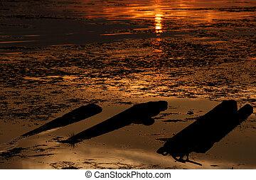 Beautiful sunset highlight logs in lake.