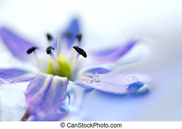 Floating flowers - Blue flowers floating in water extreme ...