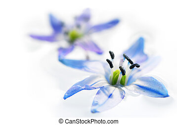 Floating flowers - Extreme macro image of blue flowers ...
