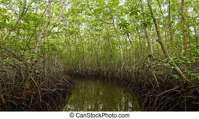 Floating in a tunnel from  mangroves