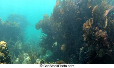 Floating over a lively coral reef with a lot of fish - ...