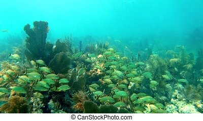 Floating over a lively soft coral reef with a lot of fish - ...