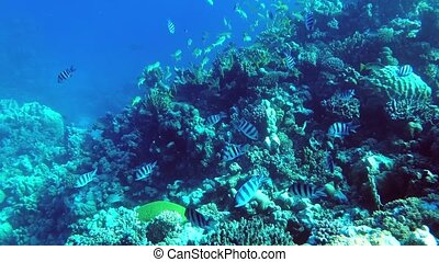 Floating over an outer coral reef with a lot of fish - ...