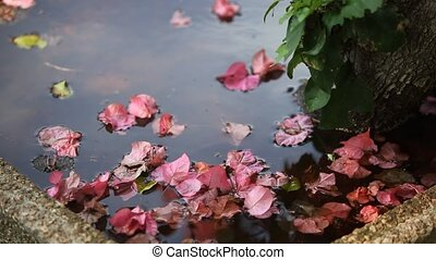Floating Petals - Some pink petals are floating at the base...
