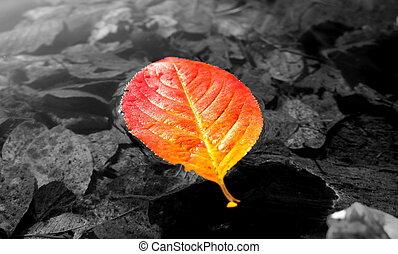 Floating red leaf