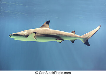 Floating shark - Picture of a floating shark in ocean