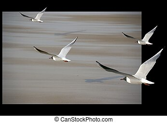 Floating - Seagulls flying into the frame.