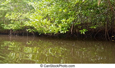 Floating through mangroves