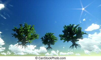 Floating trees and time lapse sky