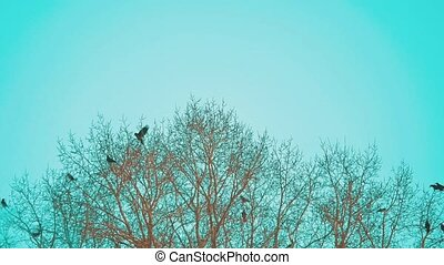 flock autumn of birds crows blue sky taking off from a tree....