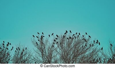 flock autumn of birds crows blue sky taking off from a tree. a flock of crows black bird dry tree . birds ravens in the sky. a flock of crows concept lifestyle